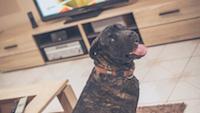 Okosotthon kutyával
